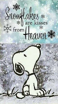 Snoopy - Snowflakes are kisses from heaven Snoopy Love, Charlie Brown And Snoopy, Snoopy And Woodstock, Charlie Brown Quotes, Charlie Brown Christmas, Peanuts Quotes, Snoopy Quotes, Phrase Cute, Funny Quotes