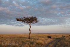 Weites Land. | Masai Mara. | Kenia. |   More pics www.shop.ingogerlach.de