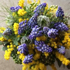 Flower arrangement.mimosa and muscari. Alley_kotani