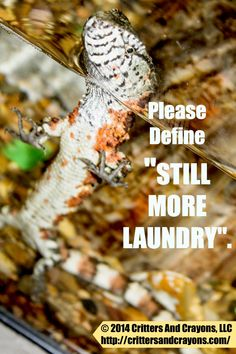 "Can+You+Define+""Still+More+Laundry"",+Please?+++From+Critters+And+Crayons."