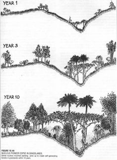 See a plethora of permaculture designs in this album. As they inspire you, decide if you want to use them in your home garden, or on a global scale. Permaculture Design, Farm Gardens, Outdoor Gardens, Ginkgo Biloba Mariken, Urban Garden Design, Forest Garden, Garden Planning, Organic Gardening, Vegetable Gardening