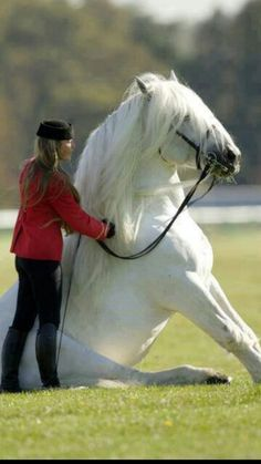 Wow... I want to teach my horse to do this..