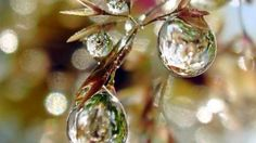 Rain drops flower dew nature HD Wallpaper