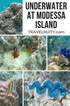 The perfect teensy-tiny island off the coast of Palawan, Philippines, Modessa Island is a rustic resort offering up amazing snorkelling right off the beach.