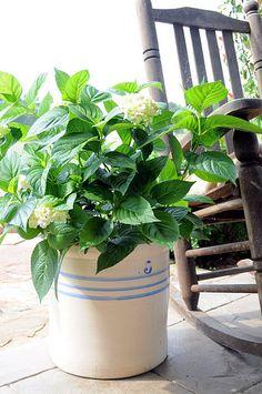 Hydrangeas in a crock...LOVE!