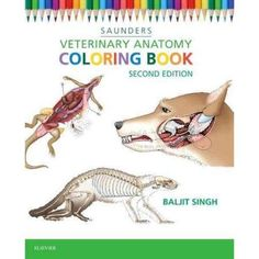 Need for First Year of Vet School----Veterinary Anatomy Coloring Book