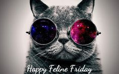 Comedy Plus: Feline Friday