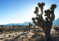 Leaving Las Vegas - Nomad & Villager