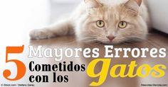 Incluso los dueños de gatos más amorosos y mejor intencionados pueden cometer errores. Aquí están los errores más comunes, y varios consejos para solucionarlos. http://mascotas.mercola.com/sitios/mascotas/archivo/2016/05/31/errores-comunes-contra-gatos.aspx