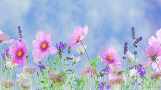 Juhász Katalin - A tavasz dala (Gyerekdal - Éneklő évszakok)