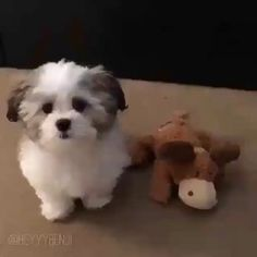 Visit us for more funny animal videos cat funny funny gif cat gif funny animals cute cat cute animals funny cat gif fu. Baby Animals Pictures, Funny Animal Pictures, Cute Funny Animals, Cute Baby Animals, Sweet Dogs, Cute Baby Dogs, Shitzu Puppies, Cute Puppies, Maltese Dogs