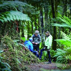 Guided journeys in New Zealand
