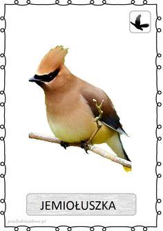 ptak13 Learning Time, Kids Learning, Learn Polish, Polish Language, My Drawings, Kindergarten, Clip Art, Birds, Education