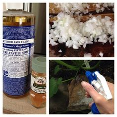 Finally, a DIY pesticide for the home garden! Only 4 ingredients, and non-toxic. Perfect protection for your organic plants.