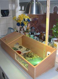 indoor tortoise enclosure - Google Search
