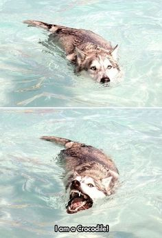 Moon Moon Goes Swimming