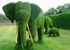 """Amazing garden full of topiary sculptures. Amazing garden full of topiary sculptures. - Art, Creative - Check out: Amazing """"Fairy Tale"""" Garden on Barnorama Elephant Family, Elephant Love, Elephant Artwork, Funny Elephant, Elephant Images, Elephant Theme, Elephant Ears, Elephant Gifts, Nature Green"""