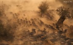 Implausibilty of Wildebeest by greg du toit on 500px