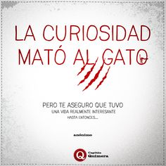 """La curiosidad mató al gato... De nuestra serie de """"Citas que nos gustan a rabiar"""""""