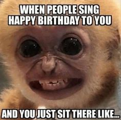 Funny Happy Birthday Meme, Funny Happy Birthday Pictures, Singing Happy Birthday, Humor Birthday, Birthday Humorous, Funny Pictures, Funny Pics, School Pictures, Sports Pictures