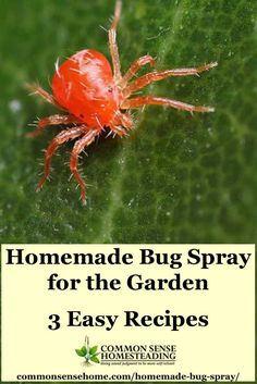 3 Easy homemade bug spray recipes that you can make with ingredients from your garden and pantry. Control bugs without waging heavy duty chemical warfare. Garden Bug Spray, Garden Bugs, Veg Garden, Garden Pests, Edible Garden, Vegetable Gardening, Garden Art, Gardening For Beginners, Gardening Tips
