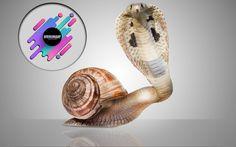 Mix between snake (Cobra) and a Snail