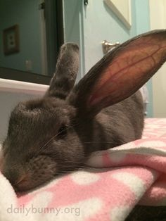 Mischievous Bunny Unravels the Toilet Paper