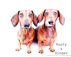 Rusty & Ginger | May 2011.  Photo by: Johnny Ortez-Tibbels ©
