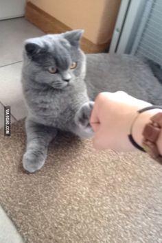 My cat is a bro #BroArmy