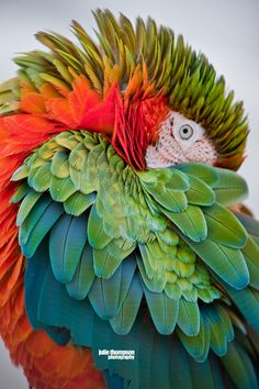 """""""Golden Spiral"""" Macaw Parrot, Butterfly World, Coconut Creek Florida (by Julie Thompson)."""