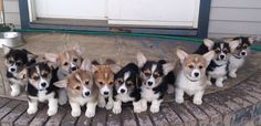 The 40 Most Important Corgis Of 2014