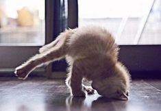 I saw you doing a headstand yesterday, so I'm just trying it out. Really, I promise!
