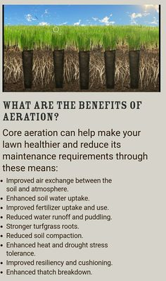 Benefits of lawn aeration.