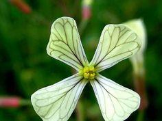 Quando i fiori si somigliano | Samudaya