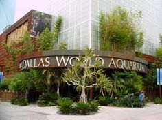 Zoo Dallas World Aquarium at Historic Dallas West End. Experience a nature adventure with 5 different exhibits. A must while in Dallas Historic West End. Dallas, Texas Pride, Dallas World Aquarium, Visit Dallas, Texas Vacations, Family Vacations, Dream Vacations, Texas Travel, Home