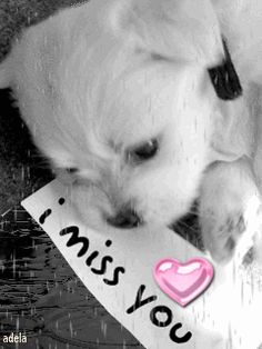 I miss you gif I Love You Pictures, Love You Gif, Say I Love You, Love You So Much, Miss You Funny, I Miss You Quotes For Him, Missing You Quotes, Postive Thoughts, Child Loss