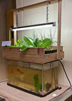 DIY Indoor Aquaponics Fish Tank Ideas 51