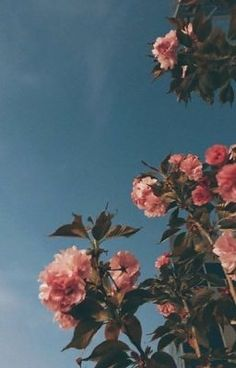 Plant Aesthetic, Flower Aesthetic, Aesthetic Images, Aesthetic Backgrounds, Aesthetic Iphone Wallpaper, Aesthetic Wallpapers, Sky Aesthetic, Journal Aesthetic, Aesthetic Painting