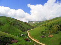 Giresun'un yüksek tepelerinde renk cümbüşü…