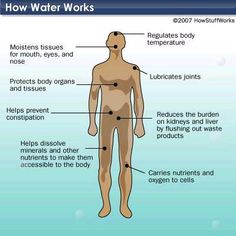 Human Water Consumption - Human water consumption is essential in order to regulate body temperature and move nutrients through our cells. Learn about human water consumption. Biology Online, Long Walk To Water, Med Surg Nursing, Safe Drinking Water, Body Organs, Disaster Preparedness, Water Conservation, Live Long, Human Body