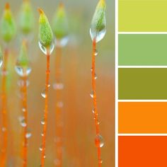 We love these bright color schemes! Modern interior colors, orange color schemes Light green and orange color scheme. Foto Macro, Orange Color Schemes, Orange Palette, Color Combinations, Fotografia Macro, Dew Drops, Jolie Photo, Green And Orange, Gray Green