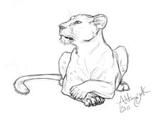 Pics For > Lioness Sketch