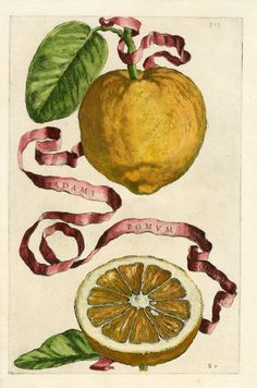 Adami Pomum, Ferrari Citrus Prints 1646
