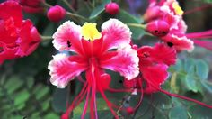 Esquivel and his Orchestra - Poinciana Esquivel, Orchestra, Jazz, Rose, Flowers, Plants, Pink, Jazz Music, Plant