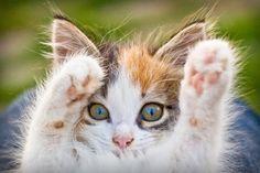 Image via We Heart It https://weheartit.com/entry/174693994 #cat