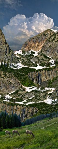2651 by peter holme iii on 500px.... #mountains #elk #clouds