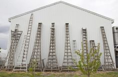 What an amazing picture of all the tripod garden ladders/orchard ladders lined up ready to harvest the fruit at this farm in Yorkshire. http://www.ladders-online.com/search?search=Tripod+Ladder=Search Thank you goes to the customer who sent us this image.