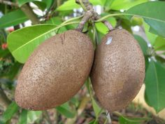 Tropical Fruit Names | Nine Tropical Fruits and Facts That You Might Not Know | Scienceray
