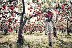 빨갛게 물든 사과 나무들 사이의 소녀 - Get Your Dream, Voguegirl.co.kr