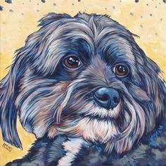 Bailey the Maltipoo (Poodle / Maltese) Portrait in Acrylic from Pet Portraits by Bethany